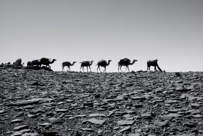 transhumance ait atta nomade maroc
