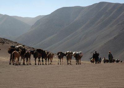caravane transhmance nomade