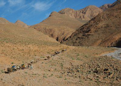 transhumance maroc berberes atlas