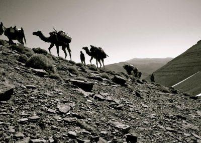 transhumance nomadic berbere